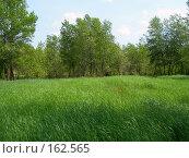 Купить «Зеленая трава весной в пойме», фото № 162565, снято 20 мая 2006 г. (c) Igor Pavlenko / Фотобанк Лори