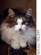 Купить «Портрет кота», фото № 162597, снято 9 марта 2006 г. (c) Морозова Татьяна / Фотобанк Лори