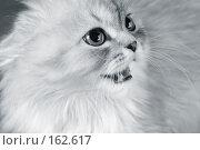 Купить «Котенок», фото № 162617, снято 24 сентября 2018 г. (c) Морозова Татьяна / Фотобанк Лори