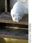 Купить «Белый кот», фото № 162625, снято 15 января 2006 г. (c) Морозова Татьяна / Фотобанк Лори