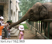 Купить «Слон», фото № 162969, снято 10 июля 2007 г. (c) Хижняк Сергей / Фотобанк Лори