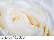 Белая роза. Макро. Стоковое фото, фотограф Олег Селезнев / Фотобанк Лори