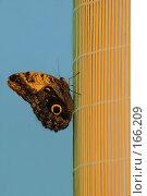 Купить «Бабочка на голубом фоне, сидящая на циновке», фото № 166209, снято 2 января 2008 г. (c) Александр Чураков / Фотобанк Лори