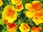 Друзья солнца, фото № 167461, снято 2 июля 2006 г. (c) Кондратьев Игорь Витальевич / Фотобанк Лори