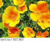 Купить «Друзья солнца», фото № 167461, снято 2 июля 2006 г. (c) Кондратьев Игорь Витальевич / Фотобанк Лори