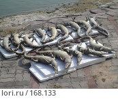 Крокодилий пляж. Стоковое фото, фотограф Устинов Геннадий / Фотобанк Лори