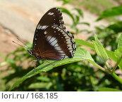 Бабочка. Стоковое фото, фотограф Устинов Геннадий / Фотобанк Лори