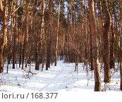 Купить «Сосновый лес», фото № 168377, снято 5 января 2008 г. (c) Карелин Д.А. / Фотобанк Лори