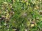 Растительность Южных Курил. Бамбук и ель, фото № 169005, снято 13 сентября 2007 г. (c) Сергей Рогальский / Фотобанк Лори