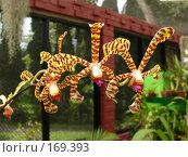 Орхидея. Стоковое фото, фотограф Устинов Геннадий / Фотобанк Лори
