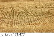 Купить «Пустое поле», фото № 171477, снято 19 августа 2007 г. (c) Александр Катайцев / Фотобанк Лори