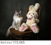 Купить «Живая кошка и игрушечный заяц», фото № 172065, снято 20 декабря 2007 г. (c) Морозова Татьяна / Фотобанк Лори