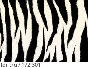 Купить «Текстура - пушистая шкура зебры», иллюстрация № 172301 (c) Лукиянова Наталья / Фотобанк Лори