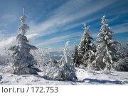 Купить «Деревья, покрытые снегом», фото № 172753, снято 7 марта 2006 г. (c) Максим Горпенюк / Фотобанк Лори