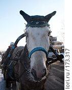 Купить «Праздничная лошадка в Суздале», фото № 173317, снято 6 января 2008 г. (c) Игорь Сидоренко / Фотобанк Лори