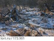 Купить «Хаос», фото № 173901, снято 8 января 2008 г. (c) Юрий Синицын / Фотобанк Лори
