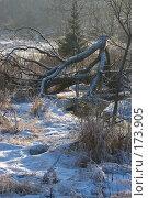 Купить «Хаос», фото № 173905, снято 8 января 2008 г. (c) Юрий Синицын / Фотобанк Лори