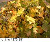 Купить «Кустарник», фото № 175881, снято 11 октября 2007 г. (c) Cавельева Елена / Фотобанк Лори