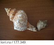 Купить «Морские раковины», фото № 177349, снято 27 августа 2006 г. (c) Галина  Горбунова / Фотобанк Лори