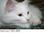 Купить «Думы», фото № 181989, снято 11 ноября 2007 г. (c) Тихомирова Ольга / Фотобанк Лори