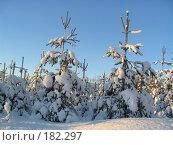Веселые елочки. Стоковое фото, фотограф Anna Marklund / Фотобанк Лори