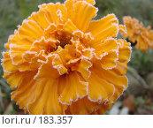 Купить «Желтый цветок», фото № 183357, снято 12 октября 2007 г. (c) Ирина Гусева / Фотобанк Лори