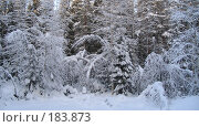 Зимнее кружево. Стоковое фото, фотограф Anna Marklund / Фотобанк Лори