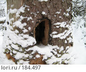 Купить «Дупло», фото № 184497, снято 23 января 2008 г. (c) Привезенцев Роман / Фотобанк Лори