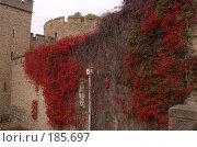 Купить «Тауэрская стена», фото № 185697, снято 4 ноября 2007 г. (c) Юлия Севастьянова / Фотобанк Лори