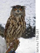 Купить «Филин», эксклюзивное фото № 186261, снято 6 января 2006 г. (c) Александр Алексеев / Фотобанк Лори