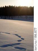 Следы на снегу в лучах заходящего солнца. Стоковое фото, фотограф Крупнов Денис / Фотобанк Лори