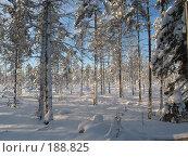 Зимой на болоте сказочно красиво. Стоковое фото, фотограф Anna Marklund / Фотобанк Лори