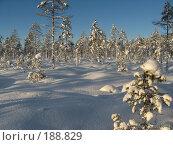 Зима. Стоковое фото, фотограф Anna Marklund / Фотобанк Лори