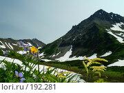 Цветы у подножия вулкана Вачкажец. Камчатка. Стоковое фото, фотограф Ирина Игумнова / Фотобанк Лори