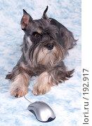 Купить «Собака охраняет компьютерную мышку», фото № 192917, снято 25 мая 2018 г. (c) AlexValent / Фотобанк Лори