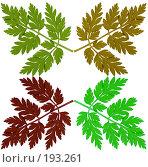 Купить «Свежая петрушка (clipping path)», фото № 193261, снято 7 октября 2007 г. (c) Алексей Судариков / Фотобанк Лори