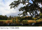 Купить «Осенний пейзаж (Пушкин)», фото № 194085, снято 23 сентября 2007 г. (c) Наталья Белотелова / Фотобанк Лори