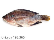 Купить «Сырая рыба на белом фоне», фото № 195365, снято 4 февраля 2008 г. (c) Угоренков Александр / Фотобанк Лори