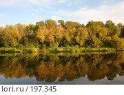 Купить «Осенний лес», фото № 197345, снято 24 апреля 2018 г. (c) Светлана Привезенцева / Фотобанк Лори