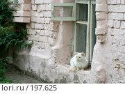 Купить «Провинциальная красавица», фото № 197625, снято 26 августа 2007 г. (c) Юрий Синицын / Фотобанк Лори