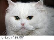 Купить «Взгляд», эксклюзивное фото № 199001, снято 7 февраля 2008 г. (c) Виктор Тараканов / Фотобанк Лори