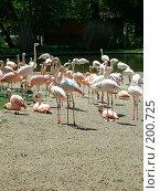 Купить «Фламинго», фото № 200725, снято 9 мая 2006 г. (c) Светлана Шушпанова / Фотобанк Лори