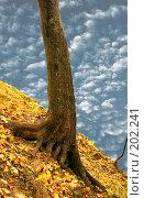Купить «На крутом склоне», фото № 202241, снято 28 сентября 2007 г. (c) Анатолий Теребенин / Фотобанк Лори