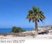 Купить «Пальма на фоне моря», фото № 202577, снято 9 августа 2006 г. (c) Юлия Селезнева / Фотобанк Лори