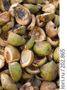 Купить «Фон половинки кокосов», фото № 202865, снято 22 января 2008 г. (c) OSHI / Фотобанк Лори