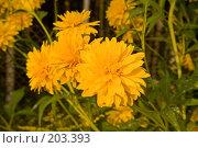 Купить «Желтые цветы», фото № 203393, снято 16 августа 2007 г. (c) Розе Андрей / Фотобанк Лори