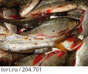 Купить «Рыба», фото № 204701, снято 6 августа 2004 г. (c) Olya&Tyoma / Фотобанк Лори