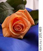 Купить «Прекрасная роза», фото № 205489, снято 13 февраля 2008 г. (c) Огульчанский Александер / Фотобанк Лори