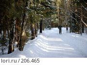 Лыжник в зимнем лесу. Стоковое фото, фотограф Евгений Труфанов / Фотобанк Лори