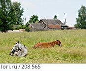 Купить «Сельский пейзаж с лошадьми», фото № 208565, снято 18 июня 2007 г. (c) Михаил Браво / Фотобанк Лори